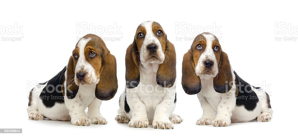 Hush Puppies royalty-free stock photo