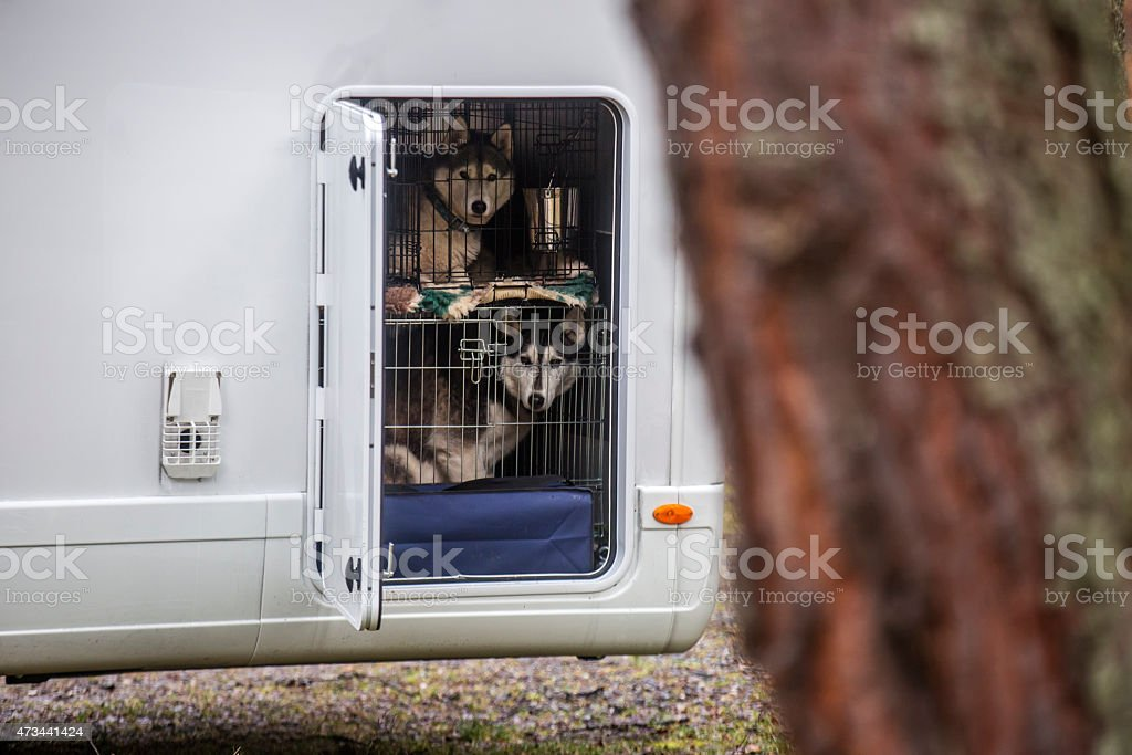 Huskeys in a dog cage stock photo