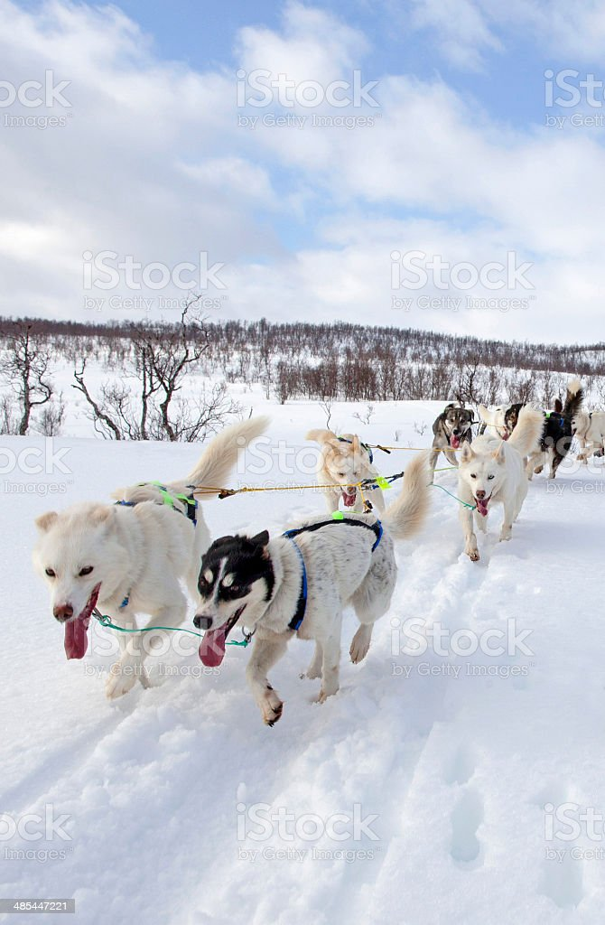 Huskies Pulling Sled Through Snow stock photo
