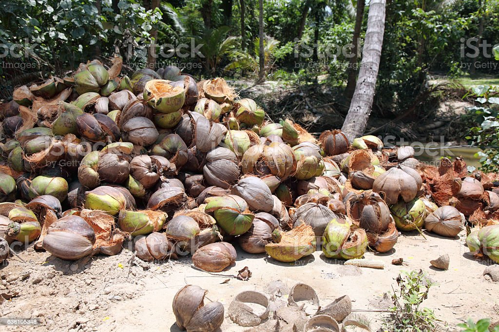 Husks of coconuts stock photo