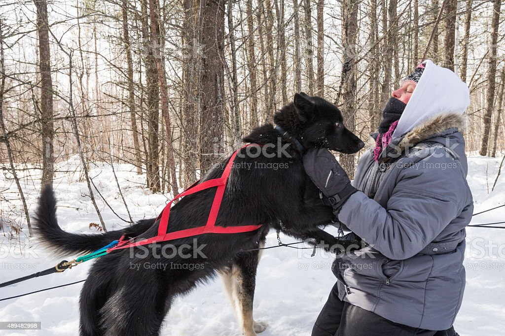 Husky jumps on woman in a winter forest stock photo
