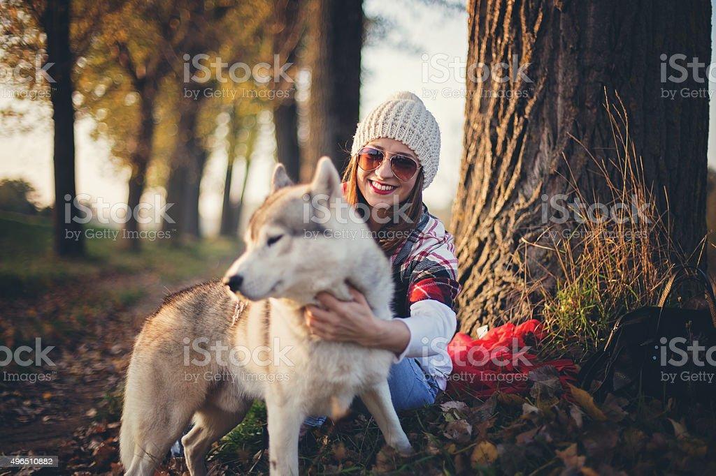 Husky loves autumn stock photo