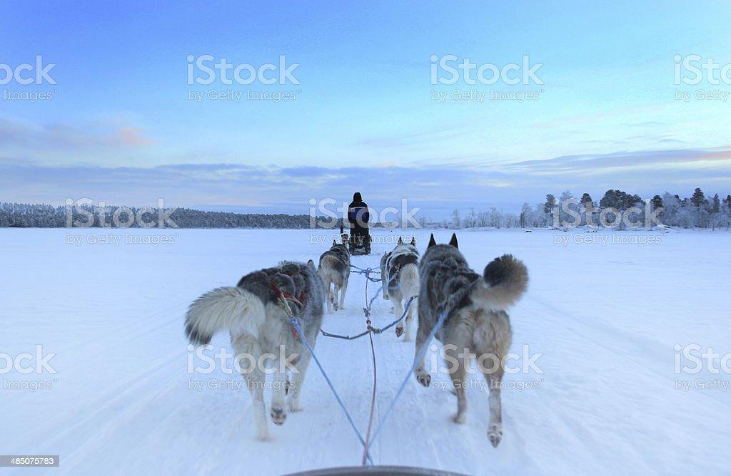 Husky Sleigh Ride on a Frozen Lake stock photo