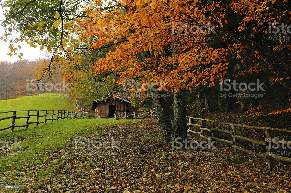 Hut beside a wood royalty-free stock photo