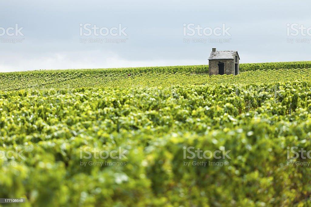 Hut in a Vineyard stock photo