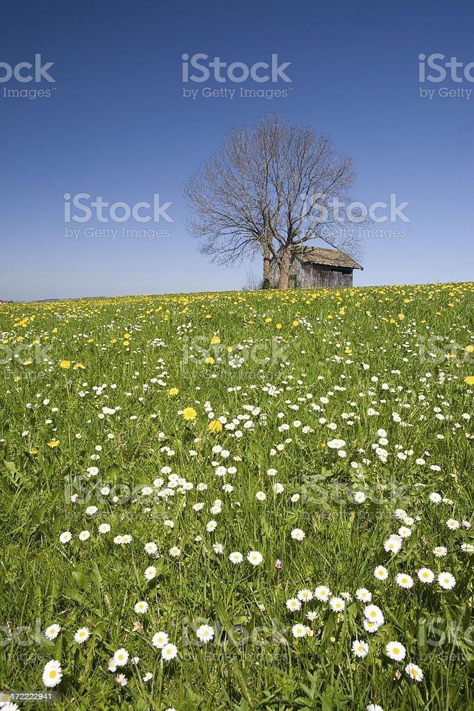 hut on meadow II royalty-free stock photo