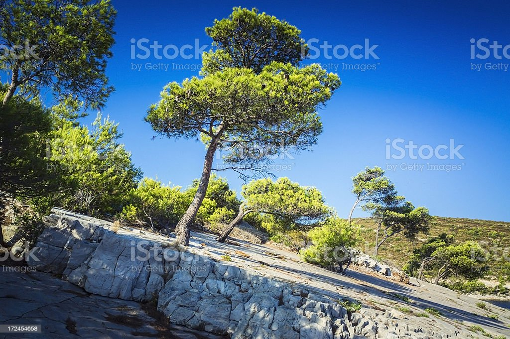 Hvar Island, nature, sky, rocks and pines, Croatia royalty-free stock photo