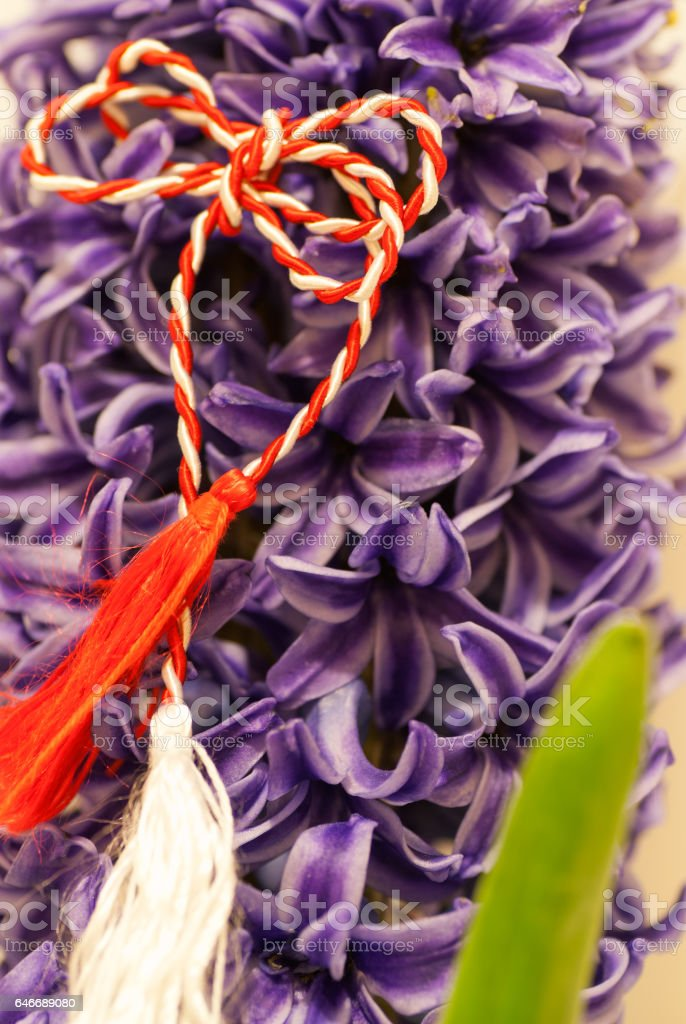 hyacinth and red an white cord 1st of March tradition martisor stock photo