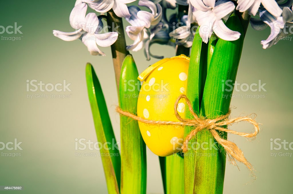 hyacinth flower and easter egg stock photo