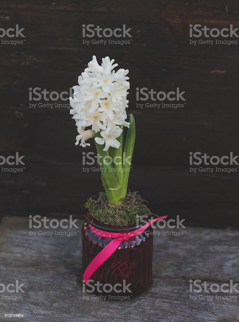 hyacinth royalty-free stock photo