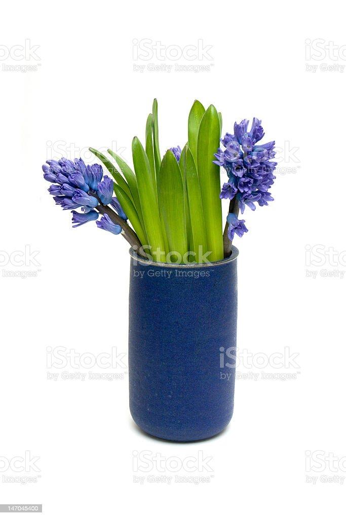 Hyacinths royalty-free stock photo