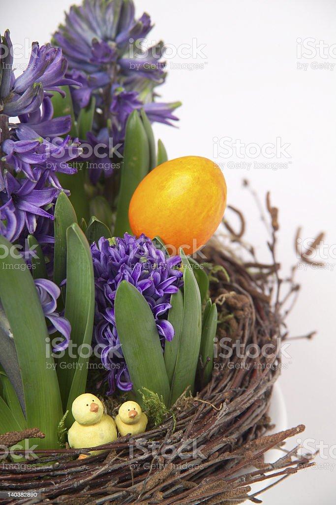 Hyazinthen zu Ostern royalty-free stock photo