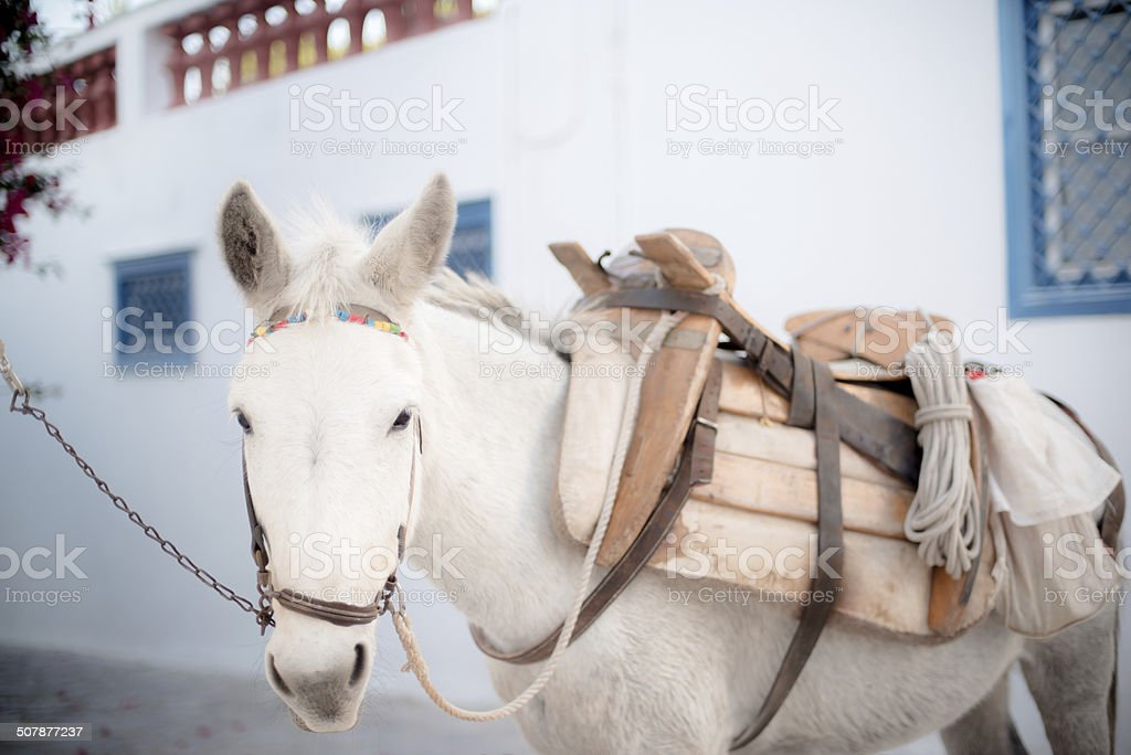 Hydra Island Donkey stock photo