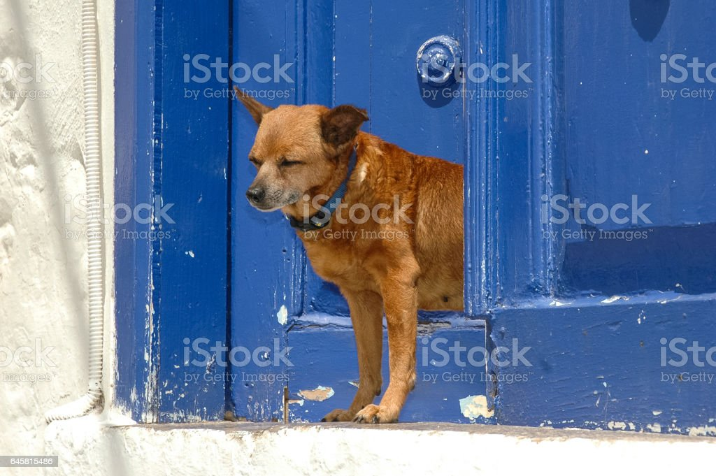 Hydra,Greece,Dog on the door stock photo