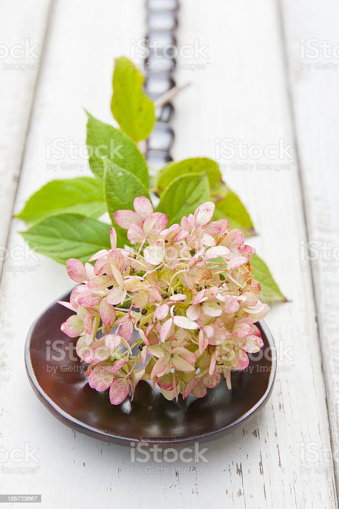 Hydrangea against rustic wood royalty-free stock photo
