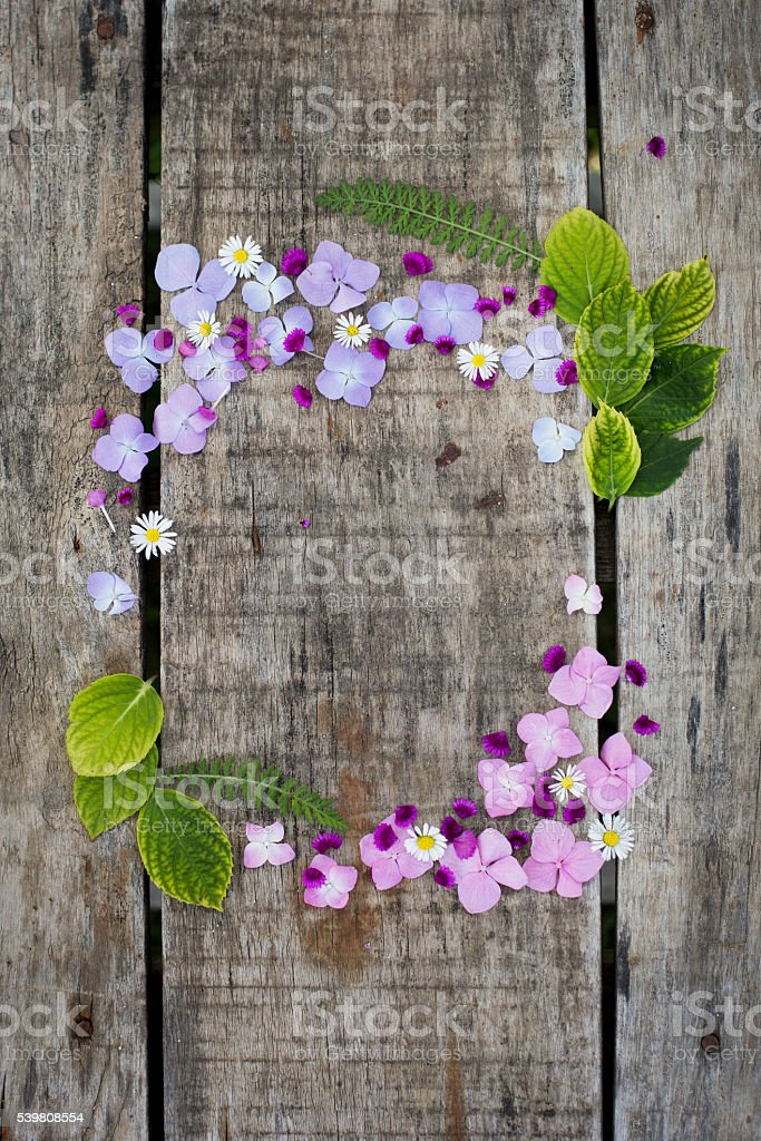 Hydrangea and Daisies flower frame stock photo