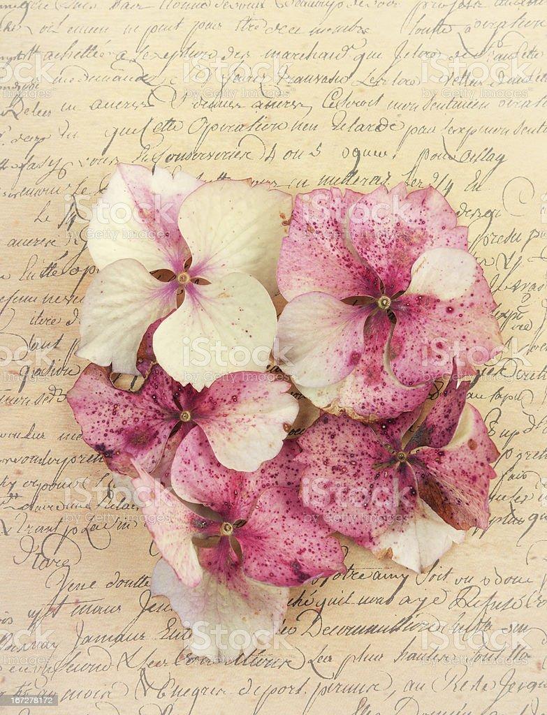 Hydrangea flower petals on paper royalty-free stock photo