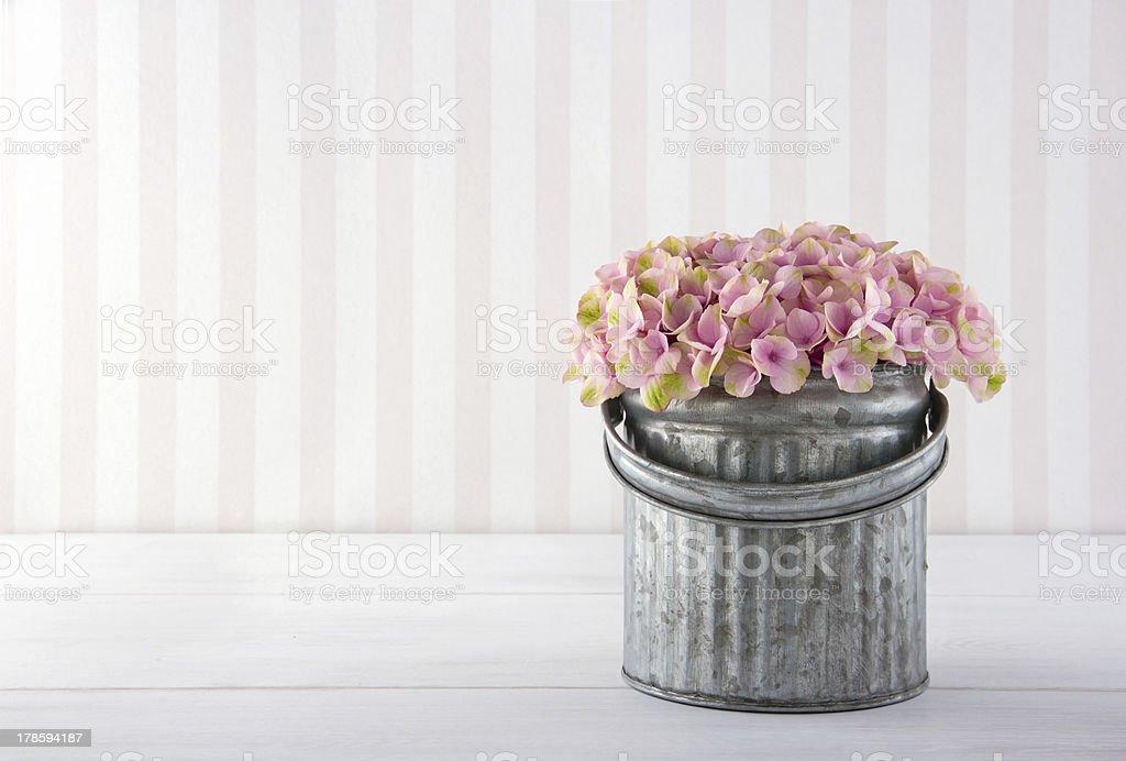 Hydrangea flowers in a metal bucket royalty-free stock photo
