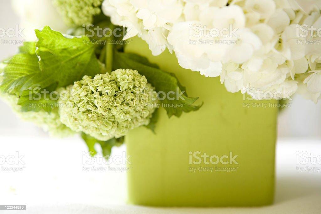 Hydrangeas royalty-free stock photo