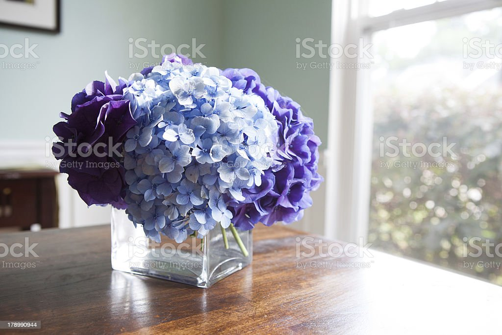 Hydrangeas sit in glass vase on wooden dining table royalty-free stock photo