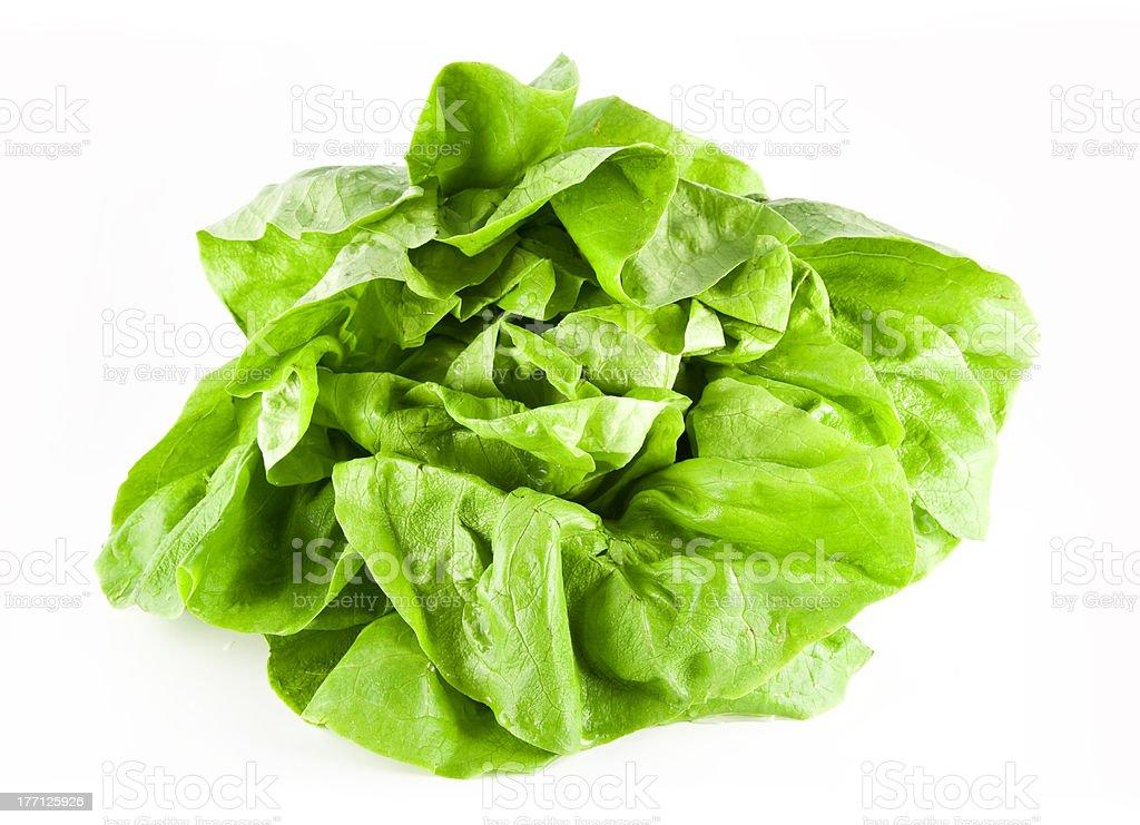 hydroponic bibb lettuce royalty-free stock photo