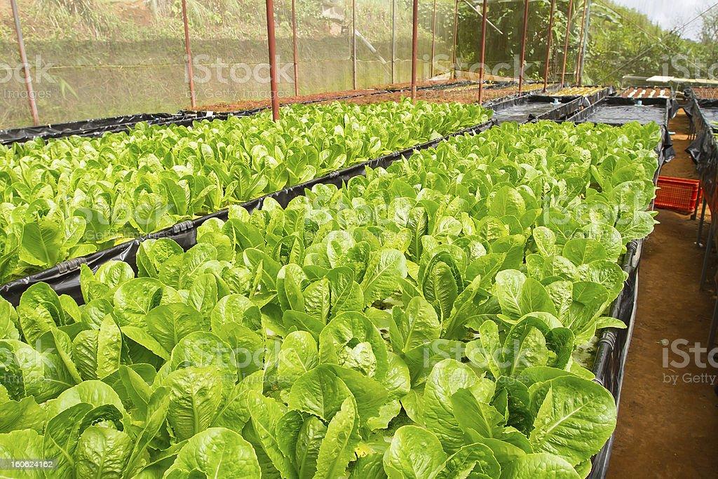 Hydroponic farm royalty-free stock photo