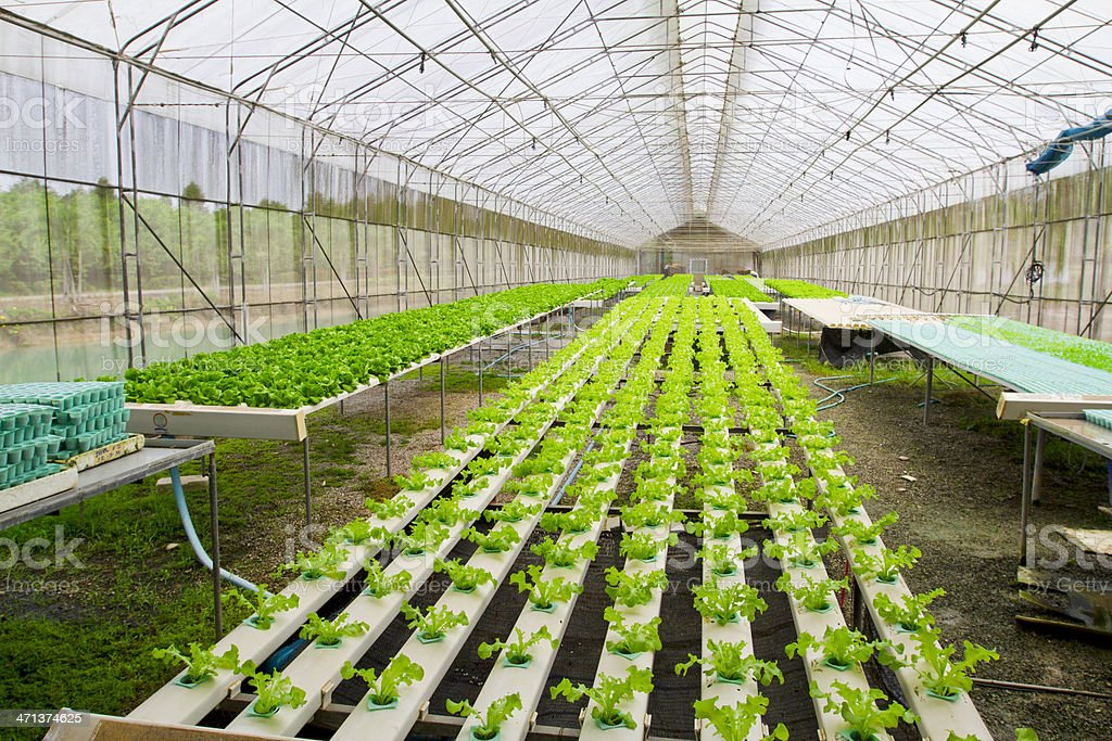 Hydroponic farm royalty-free stock photo