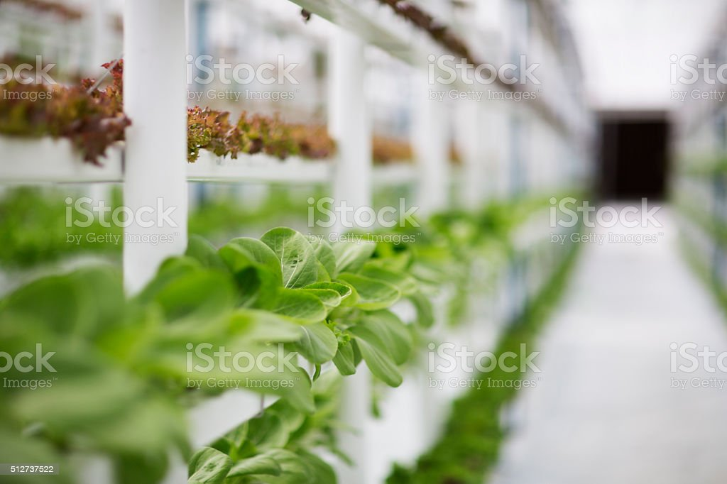 Hydroponic Farming stock photo