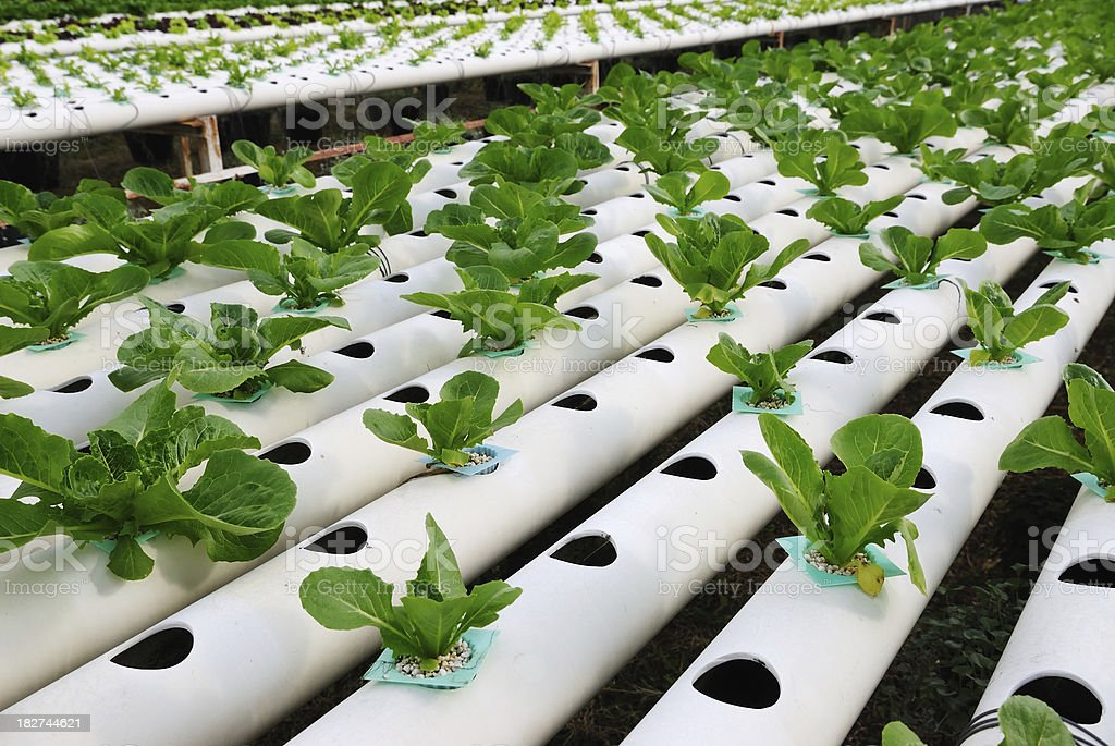 Hydroponic plant farm with white pipes stock photo