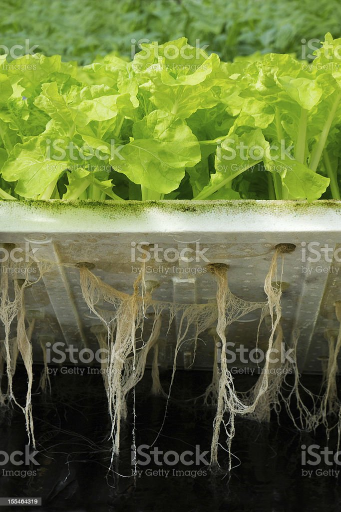 Hydroponic plantation stock photo