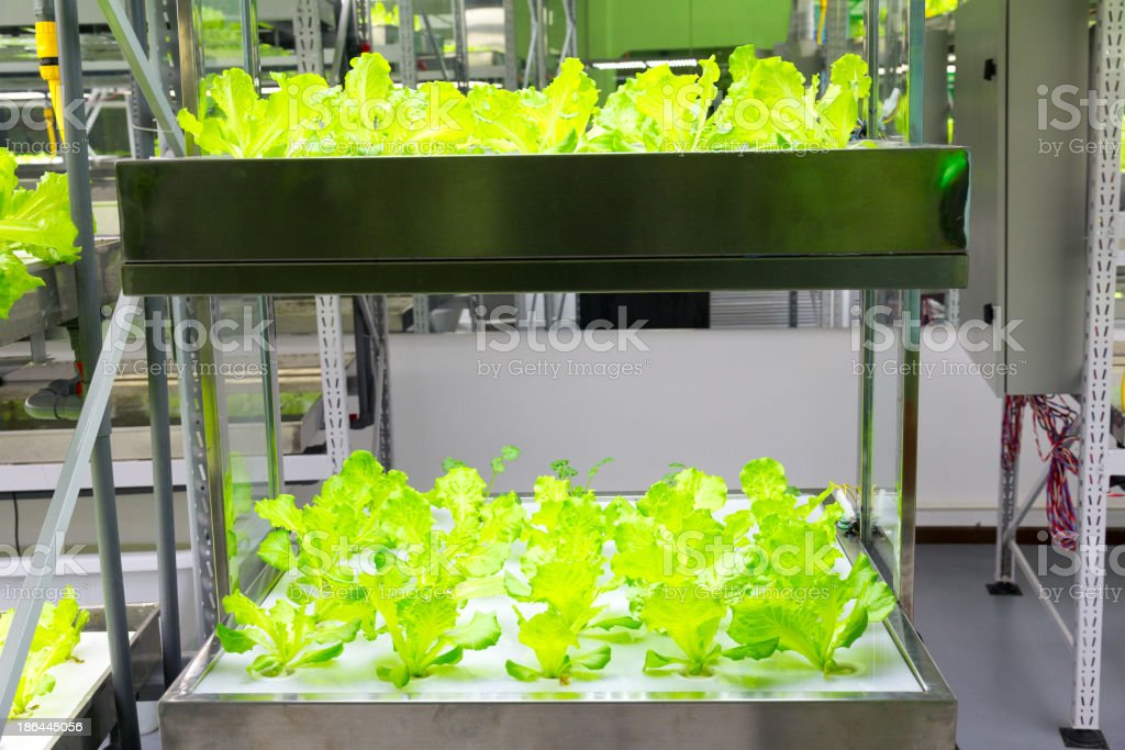 hydroponic system royalty-free stock photo