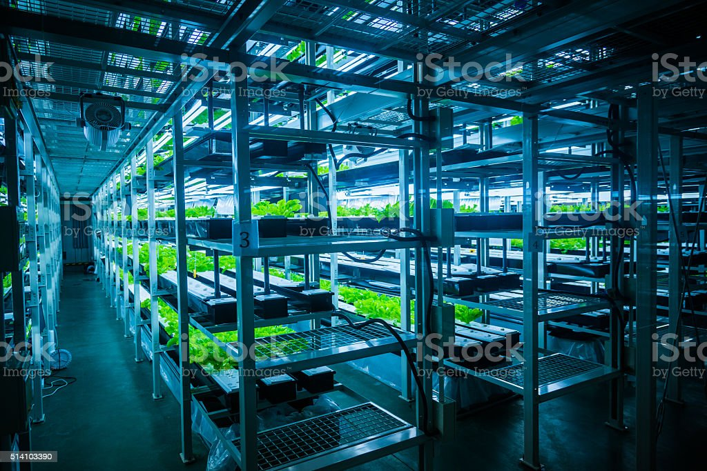 hydroponic system stock photo