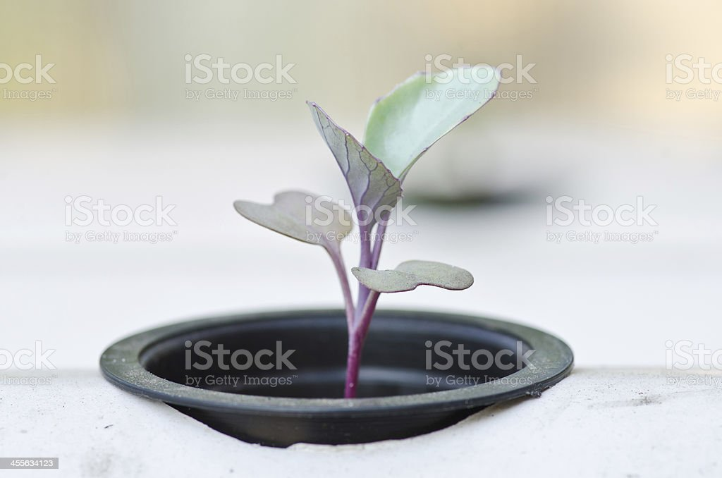 hydroponic system seedling royalty-free stock photo