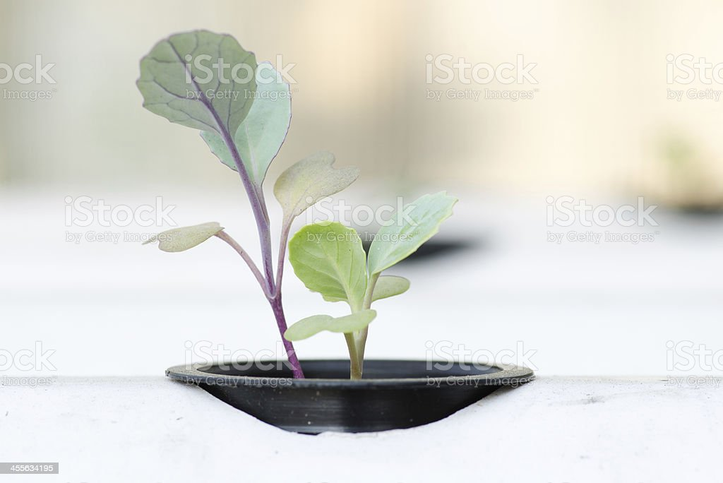 hydroponic system seedling stock photo