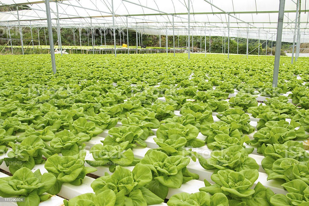 Hydroponic vegetable farm stock photo