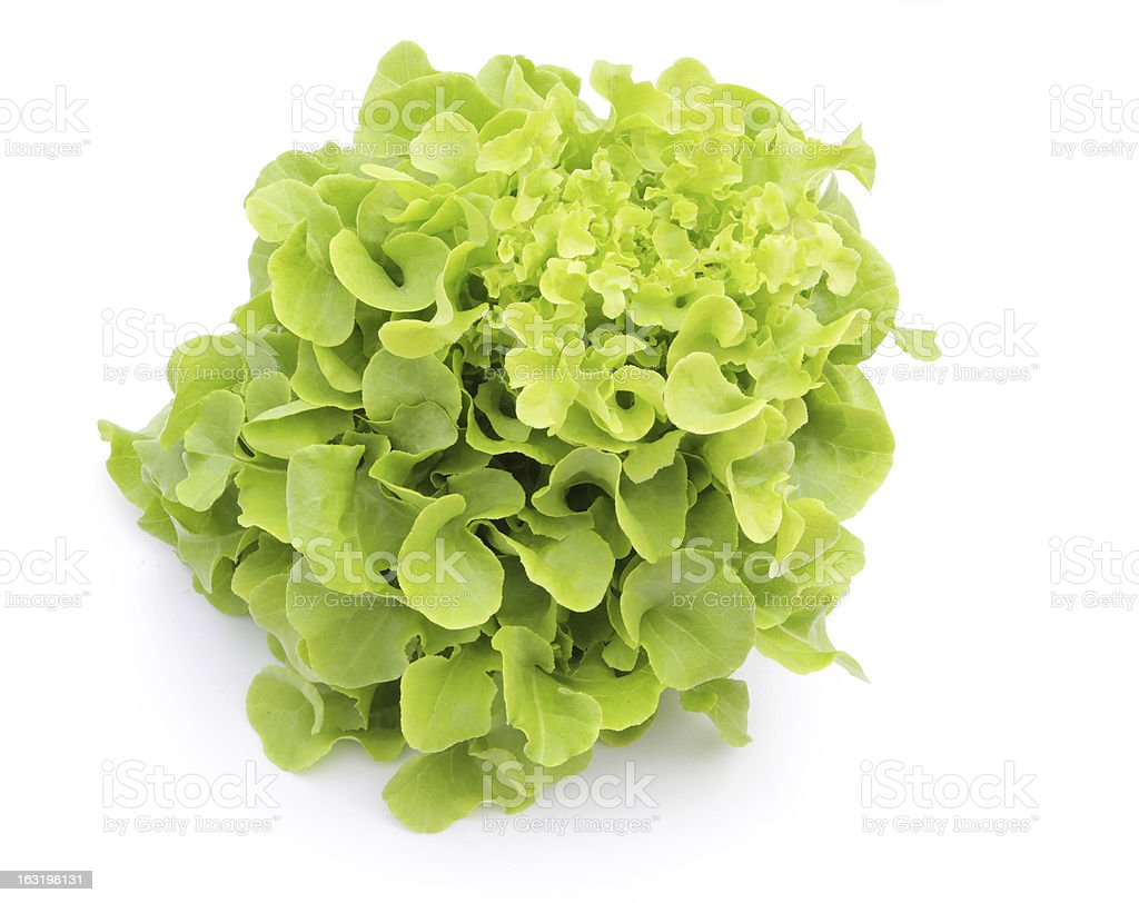 Hydroponic vegetable (Green Oak) royalty-free stock photo