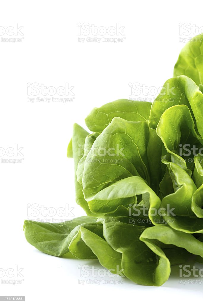 Hydroponic vegetable royalty-free stock photo