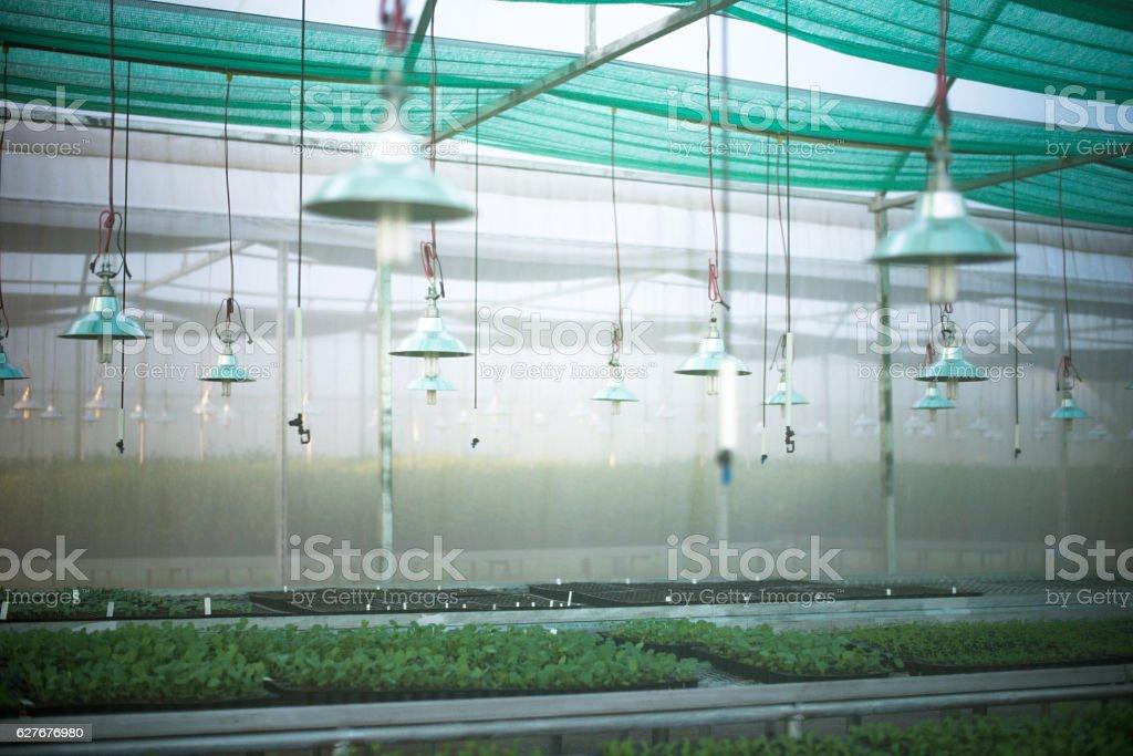Hydroponic vegetable. stock photo