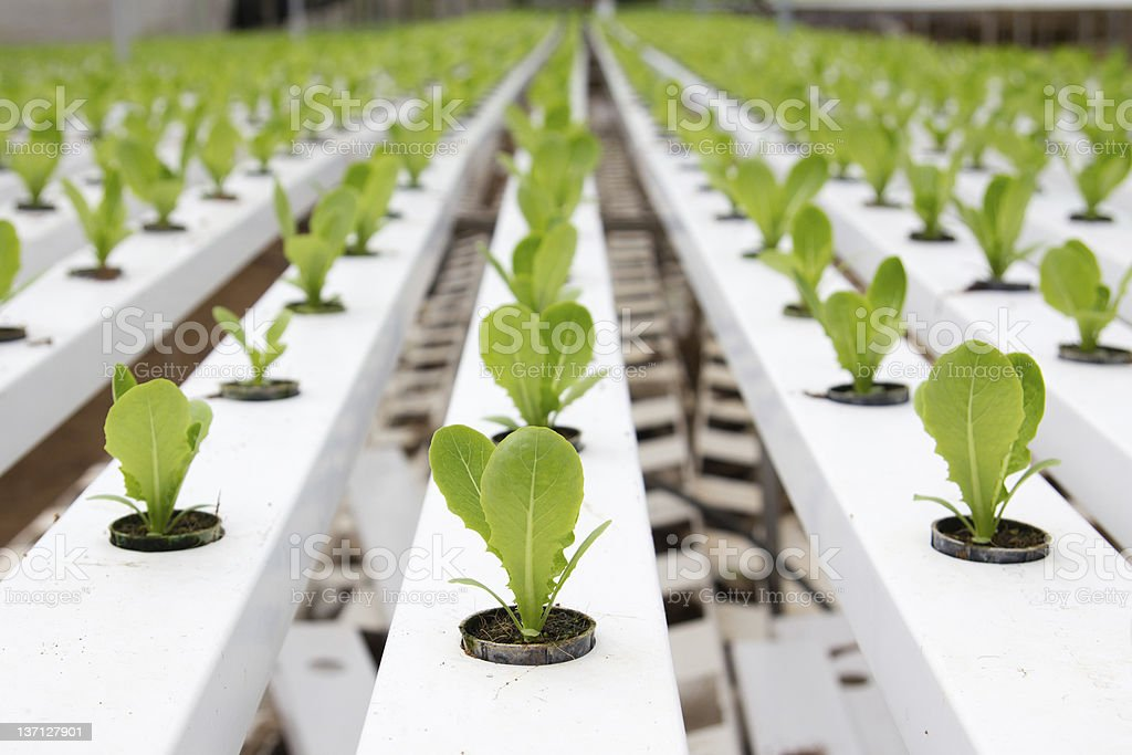 Hydroponic vegetable plantation stock photo
