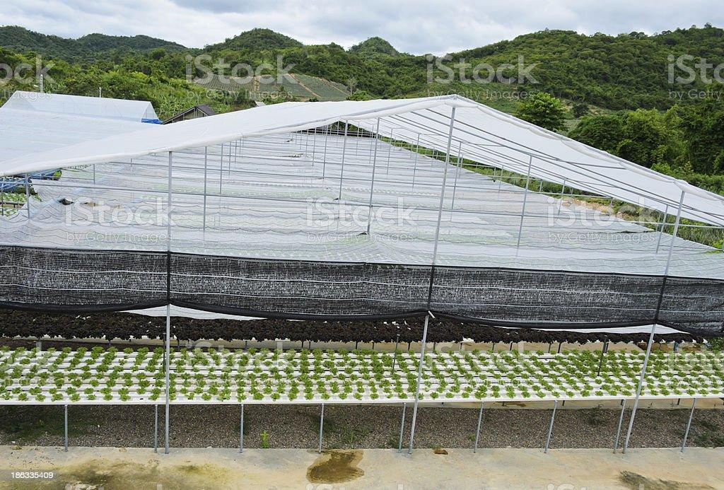 Hydroponic vegetables farm royalty-free stock photo