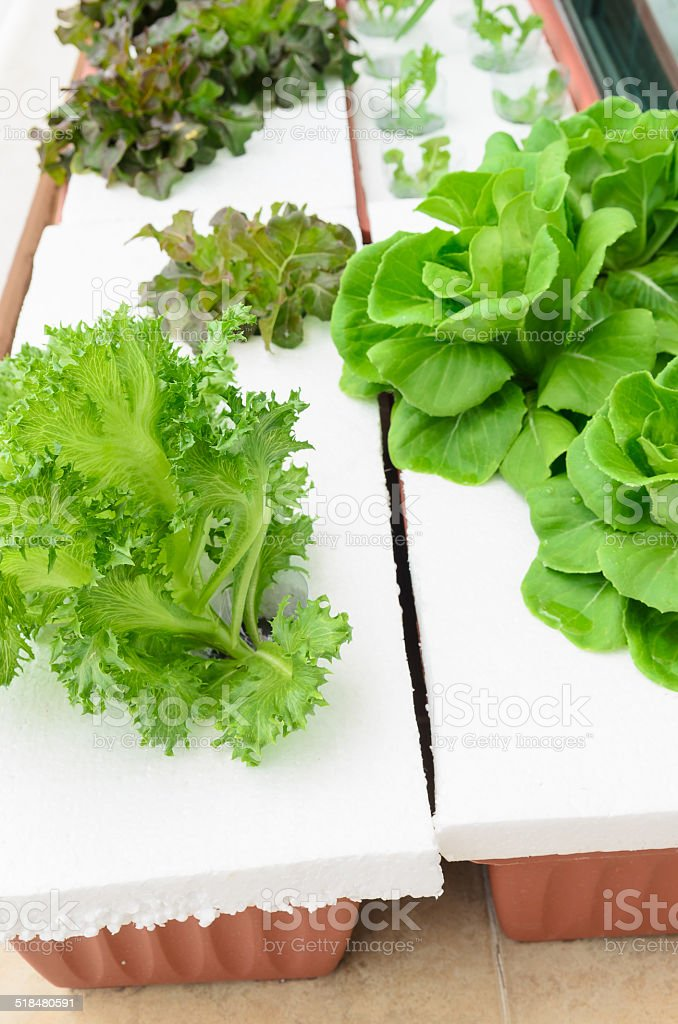 hydroponic vegeteble planting on home's balcony stock photo