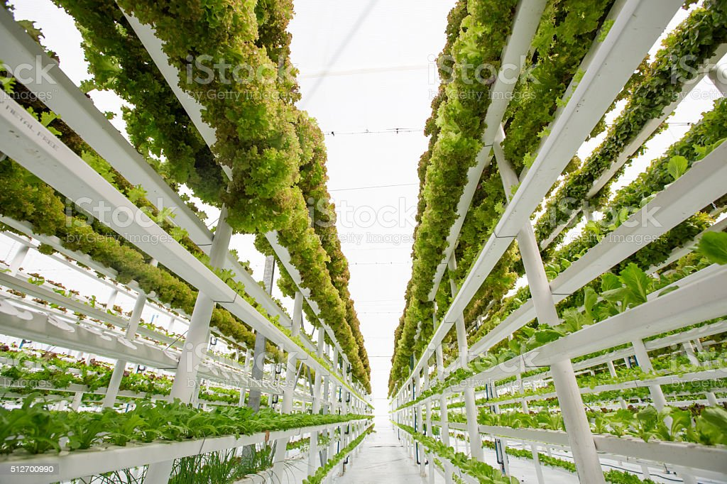 Hydroponic Vertical Farm stock photo