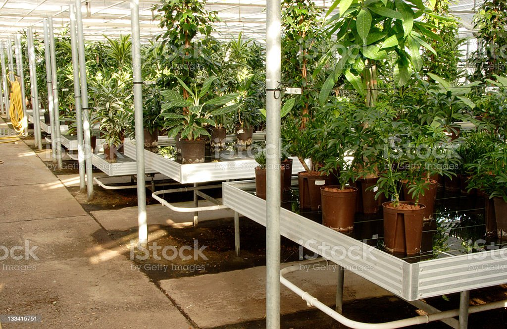 Hydroponics cultivation royalty-free stock photo