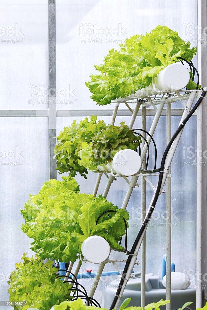 Hydroponics cultivation stock photo