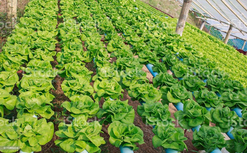 Hydroponics vegetable farm in north Thailand stock photo