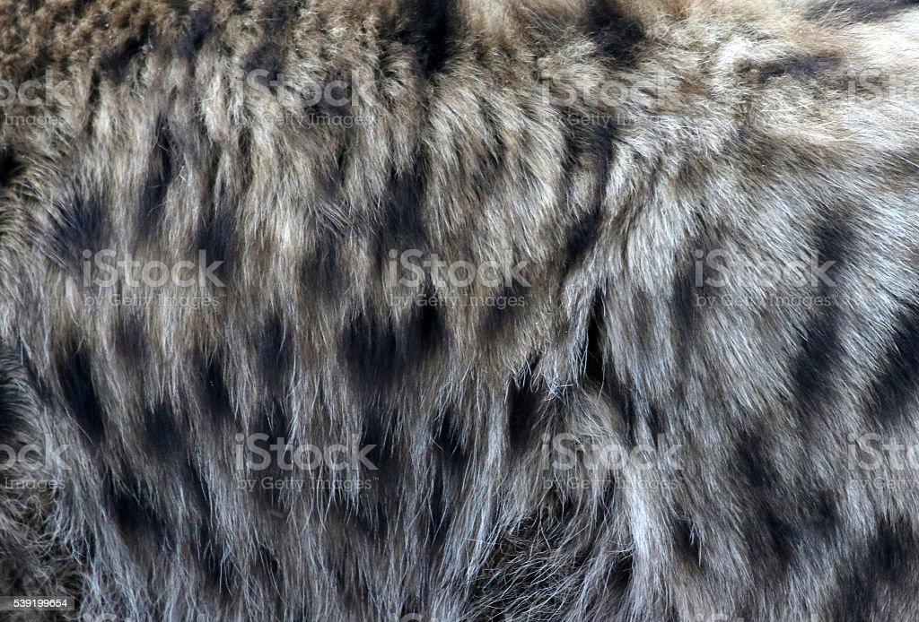 Hyena Fur stock photo