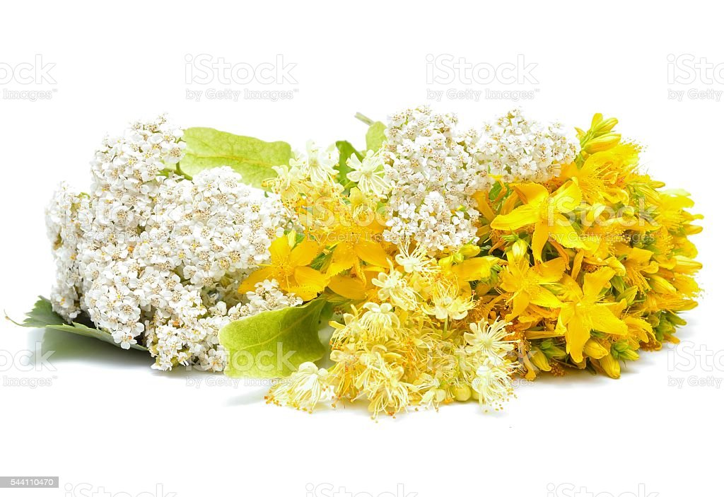 Hypericum flowers, linden flowers and yarrow flowers stock photo