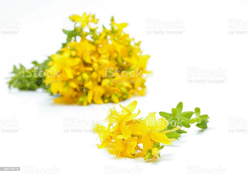 Hypericum flowers stock photo