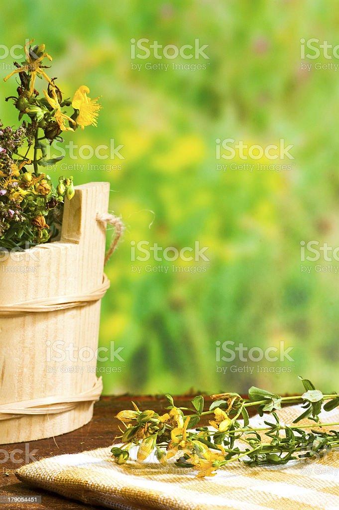 Hypericum royalty-free stock photo