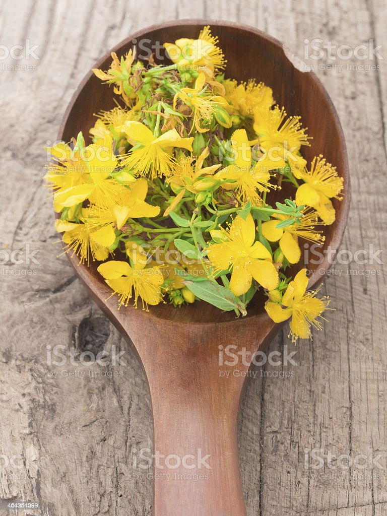 Hypericum - St John's wort royalty-free stock photo